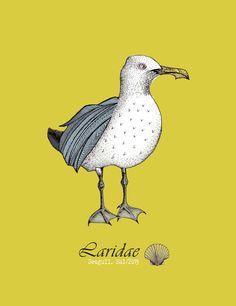 Seagull Illustration by Sal Meddings