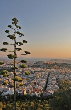 Athens from Lycabettus Hill // by Varkos on All things Hellenic