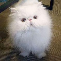 Brimley, le chat qui a trouvé une maison pour la toute première fois !