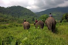The Elephant Nature Park, and The Elephant Conservative Network--Thailand. Take good care of their elephants for tourists to ride (not abused or drugged). ELEPHANTS!!