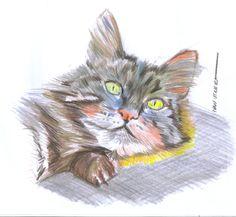 gato en lapices de colores