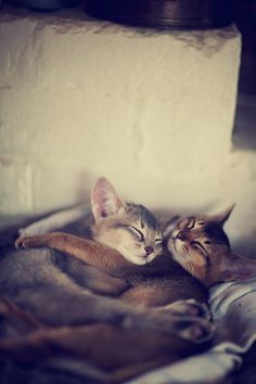 * * So they slept thru the night,  Bound in love, warm and right.