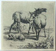 Nicolaes Berchem Animalia (Women's Sketchbook)
