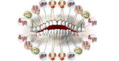 Věděli jste, že každý náš zub je spojen s konkrétním orgánem v těle?