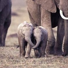 <3 Elephants are very emotional animals and they never forget a bond they make with other elephants.