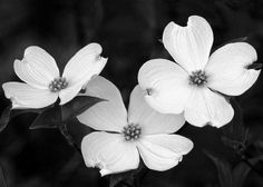 Image result for dogwood tree tattoo