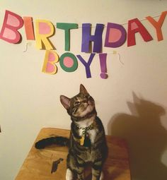 Cat birthday: one of those pictures that just make you smile.