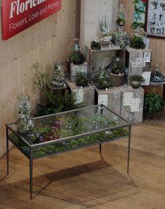 15 Best Terrarium Table Images Projects Terrariums Couch Table