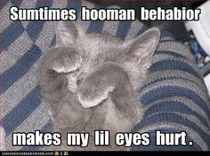 Cute kitten. so sweet
