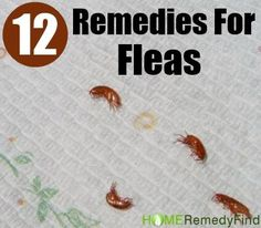 Fleas are a common health disease which is mostly found in pet animals especially among cats and dogs. It is believed that fleas are difficult…