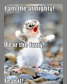 Animal Pictures Funny Sayings | Funny-animal-pictures-with-funny-sayings%2B4.jpg