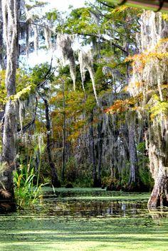 Life on the Bayou. Photo by Dustin Bradshaw. www.dtbradshaw.blogspot.com