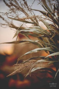 56 best Ideas for fall nature photography leaves god Seasons Of The Year, Best Seasons, Autumn Day, Autumn Leaves, Autumn Girl, Early Autumn, Winter, Fall Inspiration, Autumn Aesthetic