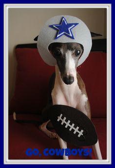 Dallas Cowboys.  Antonio the Italian Greyhound