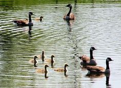 duck pond families...:-)