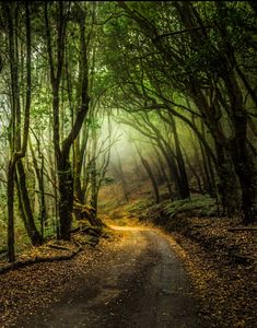 Camino en el bosque de laurisilva (Parque Nacional de Garajonay, Islas Canarias, España) por Florencio Barroso // Pathway in the laurel forest (Garajonay National Park, Canary Islands, Spain) by Florencio Barroso on 500px cr.