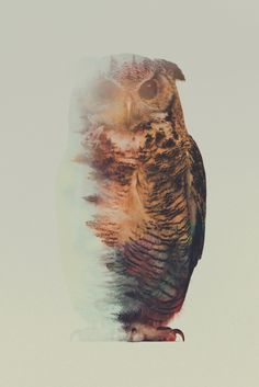 New in the Shop: Andreas Lie's Double Exposures of Animals in the Wild - My Modern Met