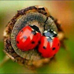 #spring Freunde ....