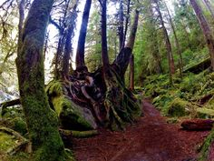 The seven highlights of hiking Olympic National Park's Staircase Loop Trail