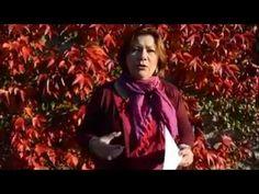 Astro Vidéo du 27 octobre  2015 par Angélique