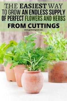 Garden Soil, Lawn And Garden, Garden Plants, Herb Garden In Kitchen, Home Vegetable Garden, Container Gardening, Gardening Tips, Indoor Gardening, Container Plants