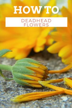 how to deadhead flow