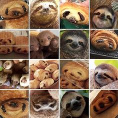 Sloth or pain au chocolat? (Does it matter when it's all this adorable? Funny Animal Memes, Funny Animal Pictures, Cute Funny Animals, Funny Cute, Funny Memes, Hilarious, Funny Pics, Random Pictures, Funny Stuff