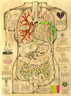"""""""Illustrator Kelsey Niziolek says she """"holds a special love in her (he)art for science, health, and medical related topics."""" Her series titled, Body Oddities, is the result of a research project on the human body and its bizarre facts. Medicine Notes, Medicine Student, Anatomy Art, Human Anatomy, Illustrations Médicales, Nursing School Notes, Biology Lessons, Science Notes, Medical Anatomy"""