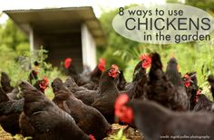 I love chickens and gardening.