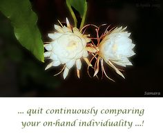 ... quit continuously comparing your on-hand #individuality ...!