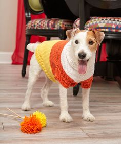 Candy Corn Dog Sweater Free Knitting Pattern. Include your furry best friend in the fall season festivities with their own candy corn inspired sweater. This knit pattern includes four sizes for a range of dog breeds. See more free Halloween Knitting Patterns Free Pattern