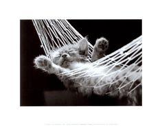 Funny Lazy Cat Nap