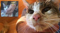 Gigia, une minette sauvée des décombres du séisme d'Italie | Animalblog