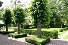 GARDEN LANDSCAPE IN CLASSIC STYLE | PURE GREEN