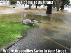 Welcome to Australia. . Crocodiles in the street.