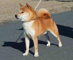 dog_img_1_3859f.jpg (694×574)