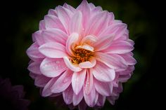 IMG_9866 by Photography by Timothy Boyle, via Flickr