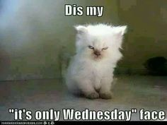 Wednesday Hump Day, Cats, Animals, Gatos, Animales, Animaux, Animal, Cat, Animais