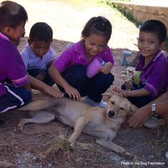 Stop Cruelty Before It Starts at The Animal Rescue Site - The Soi Dog Foundations is working to teach compassionate choices to children in Thailand