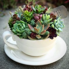 Hydroponic Gardening 9 Good DIY Waffle Garden Project and Ideas Succulents In Containers, Cacti And Succulents, Planting Succulents, Planting Flowers, Potted Plants, Container Flowers, Container Plants, Container Gardening, Succulent Gardening