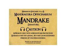 Mandragore, étiquette du Film d'Harry Potter à coller sur une plante pour faire comme si ????