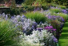 >>> lies a superb sloping garden filled with some of the loveliest asters #itsactuallyahugehahagarden @UptonHouseNT