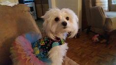 Lola Caroline turned 2 today. Here she is in her Happy Birthday Tutu Dress.