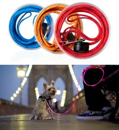 Illuminated Dog Leash :: By Joseph Hassan :: This colorful light-up leash can be seen from up to a quarter-mile in the dark. It's made of reinforced nylon, so it's strong and lightweight.    Would be perfect idea for Kim or Mom/Mishelle.