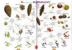 zoekkaart boomvruchten