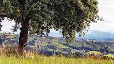 Die Weingärten von Hochgrail gehen bei der ORF-Show 9 Plätze – 9 Schätze als steirischer Landessieger um den schönsten Platz Österreichs ins Rennen. Grand Canyon, Mountains, Nature, Travel, Pictures, Road Trip Destinations, Nice Asses, Naturaleza, Viajes