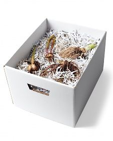 Good Tip ~ To store bulbs, such as dahlias, tuberoses, cannas, and elephant ears, that are too tender to survive outside in cold winters, place them in a box filled with the remnants of old documents from your paper shredder. The paper helps absorb moisture and prevents the bulbs from touching. Keep in a cool, dark, and dry place until you're ready to plant in the spring.