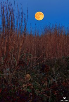 The Hunters Moon of October over meadow MetroPark near Dayton Ohio