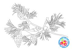 Coloring for children birds of bullfinches on a branch of pine with cones. by CreativeDesignForArt on Etsy