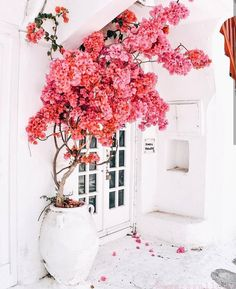 Mykonos Greece chosen by Beautiful Gardens, Beautiful Flowers, Beautiful Places, Decoration Plante, Flower Aesthetic, Wall Collage, Exterior Design, Aesthetic Wallpapers, Pretty In Pink